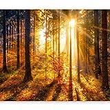 murando - Fototapete Wald 3D 400x280 cm - Vlies Tapete - Moderne Wanddeko - Design Tapete - Wandtapete - Wand Dekoration - Wald Landschaft Natur Sonne Grün Bäume Sonnenuntergang c-B-0162-a-b