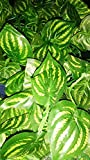 #2: Samriddhi Artificial Dense Leaves Garlands/Creepers Natural Eco Friendly Looking Leaves For Home Room Garden Wedding Garland Outside Decoration for Decoration (Shapes as per stock) - Pack of 2 Creepers