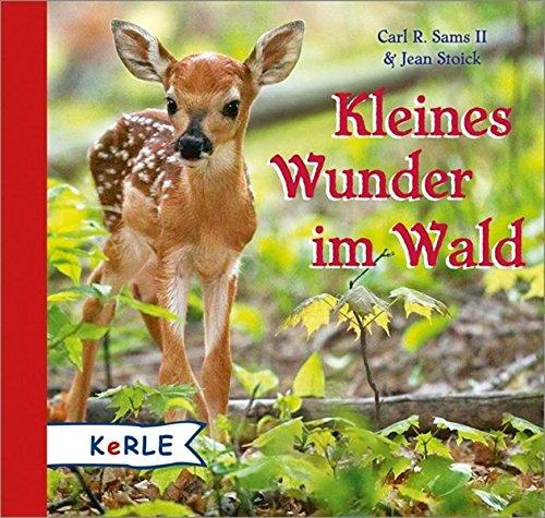 Kleines Wunder im Wald In Den Wald Bilderbuch