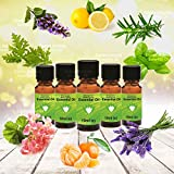 Ätherisches Öl, Zitrus-Set, 100 % rein, 10 ml, Zitrone, Limette, Orange, Bergamotte, Grapefruit