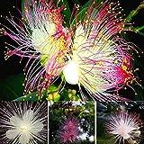 Soteer Seed House - Narcisos raros semillas plantas de jardín semillas ornamentales semillas semillas de flores multi-flor perenne resistente