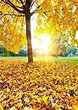 YongFoto 1,5x2,2m Vinilo Fondos Fotograficos Otoño Paisaje Amarillo Hojas de Otoño Parque Árbol Puesta de Sol Naturaleza Fondos para Fotografia Fiesta Niños Boby Boda adulto Retrato Personal Estudio Fotográfico Accesorios