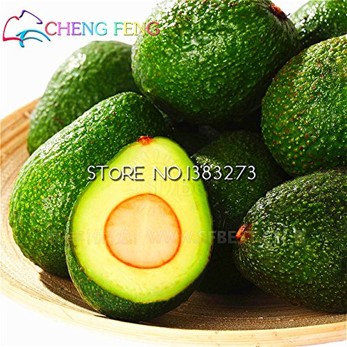 brand-new-10pcs-new-rare-green-avocado-seeds-very-delicious-pear-fruit-mini-seed-growing-easy-for-ho
