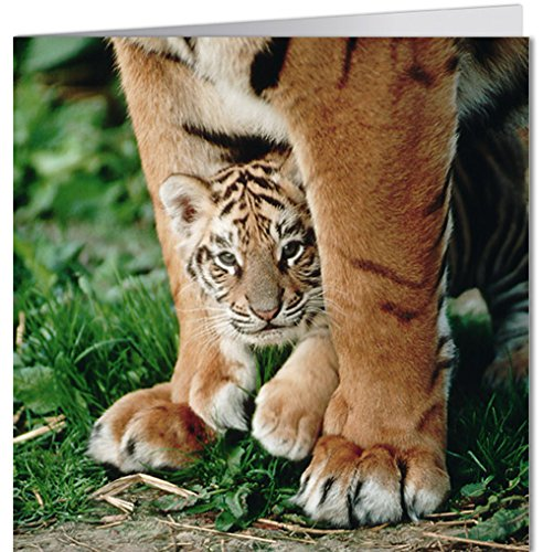 greeting-card-165x165-cm-geo-modern-time-royal-big-cats-bk-edition-geo-whittaker-terry