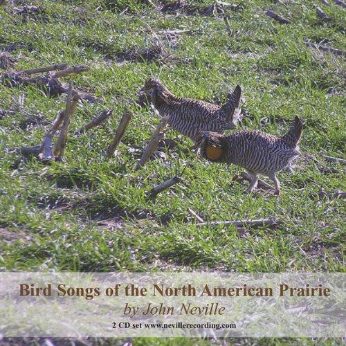 Black-Tailed Prairie Dog - Black-tailed Prairie Dog