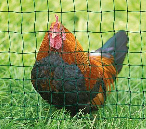 Hühnerzaun, Netz, länge 50 m, höhe 1,12 m, - 2