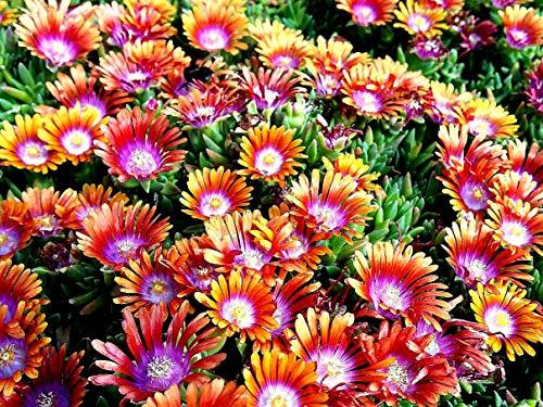 OBI Orange-rote Blüten
