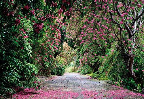 imagen-de-pared-fotografa-de-fondo-de-wicklow-parque-368x254-irlanda-del-rododendro-rosa-jardn-botni