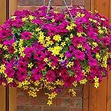 #8: Flower Seeds : Petunia Mixed Flower Seeds - Kitchen Garden Pack by Creative Farmer