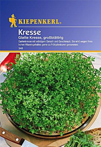 Sperli Gemüsesamen Kresse glatte, großblättrig, grün