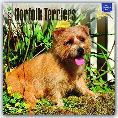 Norfolk Terriers 2017-18-Monatskalender mit freier DogDays-App: Original BrownTrout-Kalender [Mehrsprachig] [Kalender] (Wall-Kalender) (Terrier Norfolk)