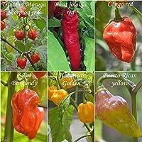 teuflische Chilis - 6 Arten - Schärfe : 8 bis 10+++ !-sortenrein verpackt- !