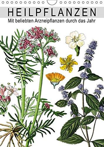 Heilpflanzen (Wandkalender 2018 DIN A4 hoch): Mit beliebten Arzneipflanzen durch das Jahr (Monatskalender, 14 Seiten ) (CALVENDO Gesundheit) ... Layout: Babette Reek, Bilder:
