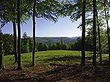 Artland Qualitätsbilder I Wandtattoo Wandsticker Wandaufkleber 80 x 60 cm Landschaften Wald Foto Grün B4EN Sonnige Lichtung im Frühling