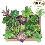 Best Jardin à la maison Plantes d'intérieur - Kalolary Artificielle Plantes Succulentes-16 Packs Mixed Unpotted Faux Review