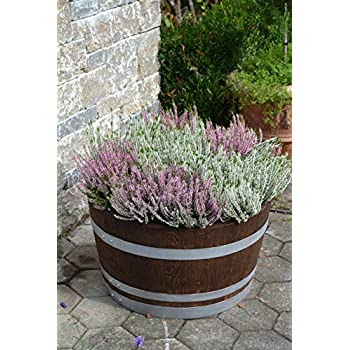 Holzfass als Pflanzkübel, Weinfass halbiert geschliffen und dunkel palisanderfarben lasiert mit silbernen Ringen (D70 cm) (ohne Zubehör)