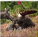 ELCHE: Original Stürtz-Kalender 2019 - Mittelformat-Kalender 33 x 31 cm