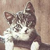 IHR Serviette Katze Kasimir 20 Stück