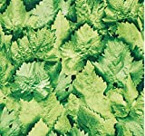 Klebefolie Möbelfolie Dekorfolie Blätter grün 45 cm x 200 cm selbstklebende Folie - Designfolie
