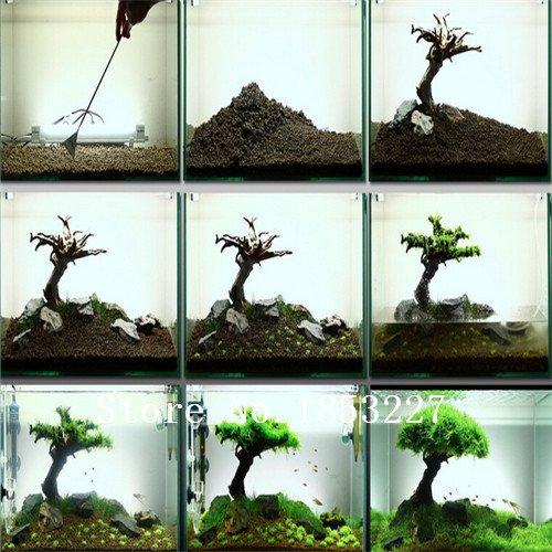 100-samen-beutel-aquarium-gras-samen-wasser-grasses-zufall-wasserpflanze-grassamen-indoor-beautifyin