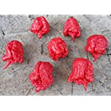 Carolina Reaper Chilli Pepper x 10 Seeds Super Hot