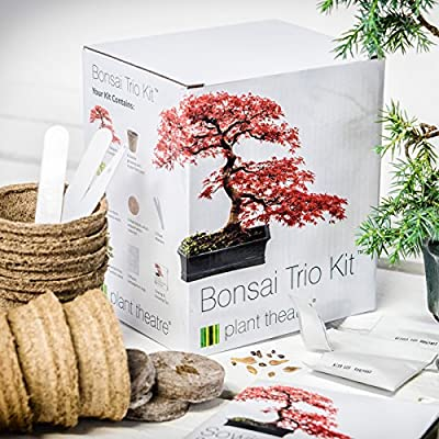 Plant Theatre Bonsai Trio Kit - 3 Distinctive Bonsai Trees to Grow.