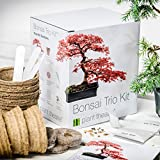 Plant Theatre Bonsai Trio, Kit per la coltivazione di 3 bonsai