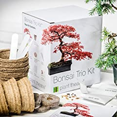 Idea Regalo - Plant Theatre Bonsai Trio, Kit per la coltivazione di 3 bonsai