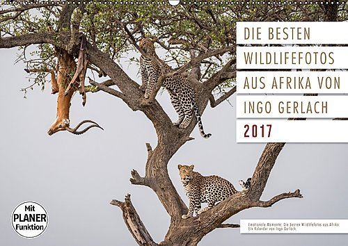 emotionale-momente-die-besten-wildlifefotos-aus-afrika-wandkalender-2017-din-a2-quer-ingo-gerlach-ha