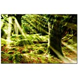 TOPPREIS nur HEUTE (Morning Sun 110x80cm) Kunstdruck Wald MORGENSONNE grün Bilder fertig gerahmt mit Keilrahmen riesig. Ausführung Kunstdruck auf Leinwand. Günstig inkl Rahmen