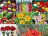 #10: Kraft Special Best Germination Flower Bulbs Designed for Summer Season (April to June) Dedicate to Garden Lovers