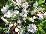 3-4 m² Sommerblumenmischung Traumgarten in Weiß Blumenmischung Blumensaat auch für Balkonkasten