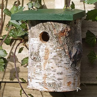 birch log nest box for birds 32mm hole size *fsc Birch Log Nest Box for Birds 32mm Hole Size *FSC 61rWmKMtO6L