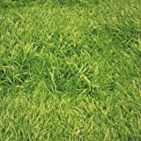 Stoff Meterware Fotodruck Gras Rasen wiese grün Fussball