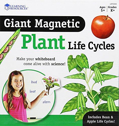 Learning Resources Riesiger magnetischer Lebenszyklus einer Pflanze,