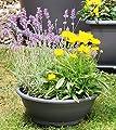 Floralo Pflanzschale, Schale rund Durchmesser von Floralo bei Du und dein Garten
