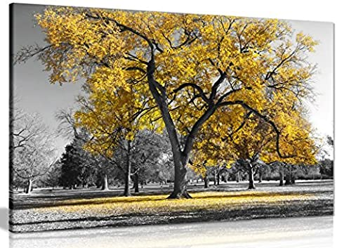 Large Tree Yellow Leaves Black White Nature Canvas Wall Art Picture Print (36x24in)