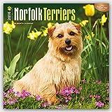 Norfolk Terriers 2016 Wall