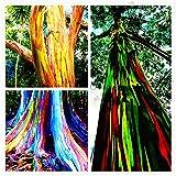 100pcs / pack seltene Regenbogen-Eukalyptus-Samen, Bonsai-Baum-Samen Hof Anlage für zu Hause Garten Bepflanzung Topf