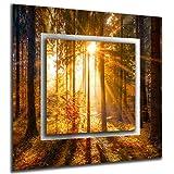 bilder-paradies Wandbild Wandbilder auf Alu-Dibond Bild Bilder Wohnraumaccessoires Wohnraumdekoration Wald Natur Sonne 8308-1BMRa