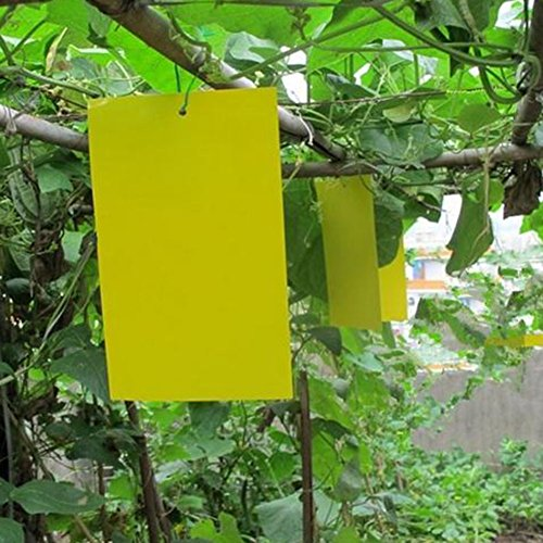 61raCGNCuyL. SS500  - Lumanuby 10 Sheet/Set Sticky Insect Board Yellow PVC Plastic Dual-Sided Sticky Board Garden Fly Traps for Plant Insect…