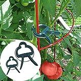 SHIJING 20Pcs Albero Piante Fiore Piantina Stelo Supporto Attrezzi da Giardino Clip a Molla Materiale Resistente alle intemperie Clip di plastica