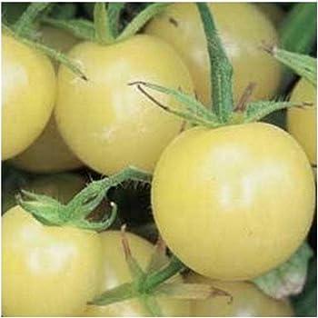 Tomate weiße Cherry-Tomate Schneewittchen 20 Samen