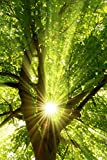 Infrarotheizung Bildheizung PREMIUM, rahmenlos mit Bild, 740 Watt, 90x60x1,5 cm, Motiv Sonnenstrahlen hoch
