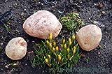 3er Set Gartenstein Polyresin Leuchtsteine Steinskulptur beleuchtet Dekoleuchte