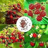 Cioler Seed House - Graines de fraises sauvages rares rares, Couvre-sol de framboise biologique...