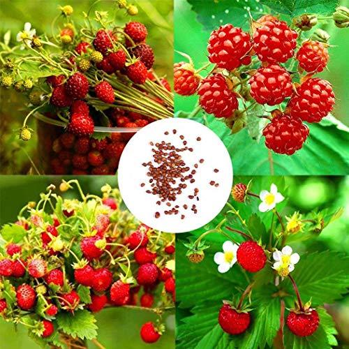 Ultrey Samenshop - 50 stück Wilde Erdbeeren Samen zuckersüss zuckersüss umweltfreundliche Bio-Saatgut Himbeere Bodendecker oder Topf wachsen für Garten Balkon/Terrasse