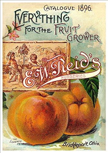 ewreids-nurseries-reids-catalogue-1896-a4-glossy-art-print-taken-from-a-beautifully-illustrated-vint