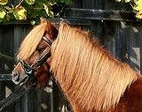 Kappzaum mit Gebiss Einhängung Minipony Minishetty Mini Shetty Pony VB WB Leder Schwarz Tysons (MS)