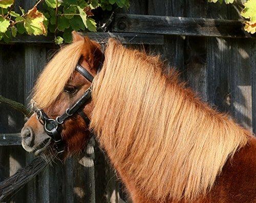Kappzaum mit Gebiss Einhängung Minipony Minishetty Mini Shetty Pony VB WB Leder Schwarz Tysons (S)